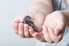 En fjäril av silkmoth i en child& x27; s-händer - dispar Lymantria arkivbild