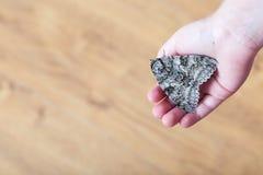 En fjäril av silkmoth i händer för barn` ett s arkivfoto
