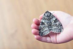 En fjäril av silkmoth i händer för barn` ett s royaltyfri foto
