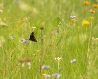 En fjäril i en äng fotografering för bildbyråer