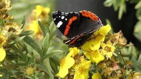 En fjäril kryper vid färg arkivfilmer