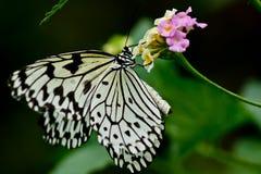En fjäril landar på en blomma arkivbilder