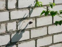 En fjäril med vikta vingar sitter på en brant vit-tegelsten royaltyfria foton
