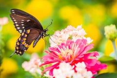 En fjäril på en blomma fotografering för bildbyråer