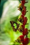 En fjäril på en blomma royaltyfri bild