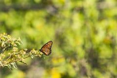 En fjäril på en blomma Arkivfoton