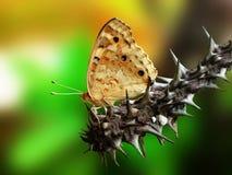 En fjäril på en euphorbiastam Arkivfoton