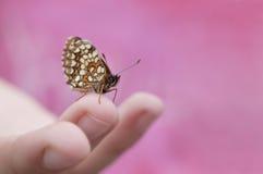 En fjäril på en spets av fingret Fotografering för Bildbyråer
