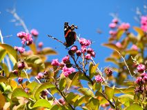 En fjäril samlar nektar på ett klart och att blomma sommardag royaltyfri foto