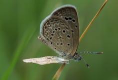En fjäril som landas på gräs Arkivfoto