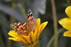 En fjäril vilar på blomman royaltyfri fotografi