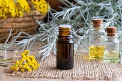 En flaska av nödvändig olja för helichrysum med ny blommande helich royaltyfria bilder
