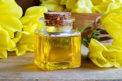 En flaska av nattljusolja med ny blommande aftonpri Arkivfoton
