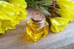 En flaska av nattljusolja med ny blommande aftonpri Arkivbilder