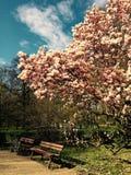 En fleur Photo libre de droits
