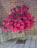 En fleur Photographie stock libre de droits