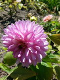 En fleur Images stock