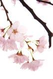 En fleur Photos stock