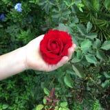 En fleur de la jeunesse Image stock