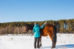 En flicka borstar en häst med damm och skäggstubb på en solig dag i ett vinterfält royaltyfri bild