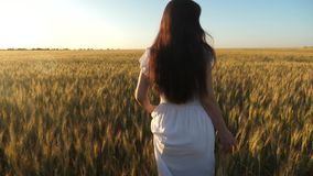 En flicka g?r ?ver ett f?lt av moget vete och trycker p? ?ronen av korn med hennes h?nder l?ngsam r?relse h?rlig kvinna lager videofilmer