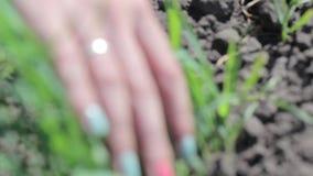 En flicka med kulört spikar drar rensar ut Arbeta på en grönsaklantgård stock video