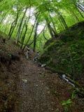 En flicka med en ryggsäck klättrar skogen för berget på våren arkivbilder