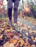 En flicka med trekking pinnar Royaltyfri Fotografi
