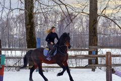 En flicka på en häst hoppar galopper En flicka utbildar att rida en häst i en liten paddock En molnig vinterdag Royaltyfria Bilder