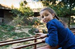 En flicka på zoo ser tigrarna arkivbilder