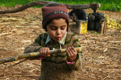 En flicka som tuggar sockerröret Royaltyfri Foto