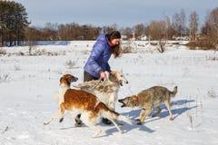 En flicka, en varg och två hund- vinthundar som spelar i fältet i vinter i snön royaltyfria bilder
