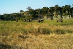 En flock av afrikanska elefanter i ett pittoreskt landskap arkivbild