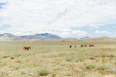 En flock av bruna hästar för barn som stöter ihop med fältet Sommar utomhus Royaltyfri Foto
