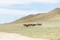 En flock av bruna hästar för barn som stöter ihop med fältet Sommar utomhus Arkivfoto
