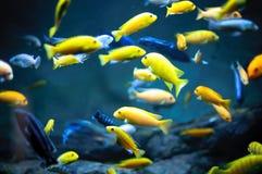 En flock av den färgrika fisken Fotografering för Bildbyråer