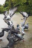 En flock av duvor i parkera arkivbild