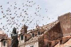 En flock av duvor som flyger i den ljusblå himlen över taken av den gamla medeltida staden I förgrunden är en staty royaltyfria foton