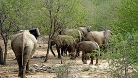 En flock av elefanter Arkivbild