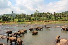 En flock av elefanter kom till brunnsorten En flock av elefanter kom till brunnsorten arkivfoton