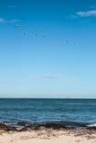 En flock av fågeln som flyger över havet Arkivbilder