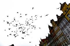 En flock av fåglar över byggnaden royaltyfri fotografi