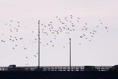 En flock av fåglar royaltyfria foton