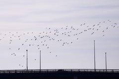En flock av fåglar royaltyfria bilder