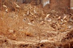 En flock av fåglar Royaltyfri Fotografi