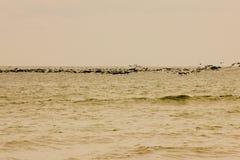 En flock av fåglar Arkivfoton