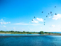 En flock av fåglar i skyen Royaltyfria Foton