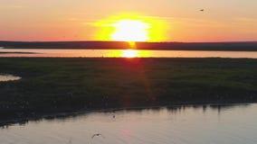 En flock av fåglar på bakgrunden av färgrik himmel Solnedgång på floden Ö av fiskmåsar Fågelfluga på solnedgången, antenn stock video