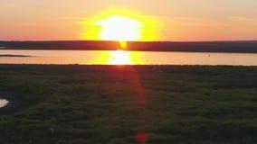En flock av fåglar på bakgrunden av färgrik himmel Solnedgång på floden Ö av fiskmåsar Fågelfluga på solnedgången, antenn arkivfilmer
