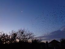 En flock av fåglar på gryning Royaltyfria Foton